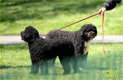 first dog white house michelle obama brings the first dogs to the white house easter egg roll photo