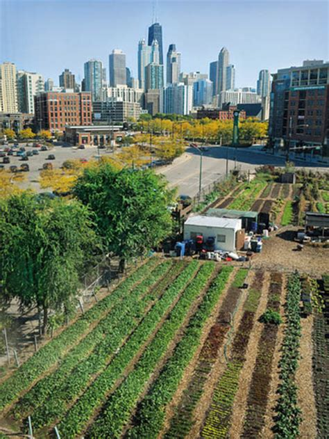 city farming a how to guide to growing crops and raising livestock in spaces books financing agriculture a field of possibilities
