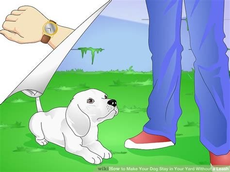 how to your to stay in your yard how to make your stay in your yard without a leash