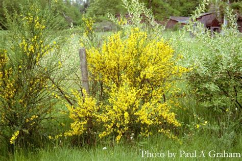 why is there a toothbrush in the bushes and other mysteries books a commentary on scotch broom the irresistible fleet