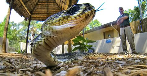 feds ban   snakes hoping  protect everglades