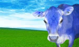 the blue cow ringmaster to the rainbow radiolab