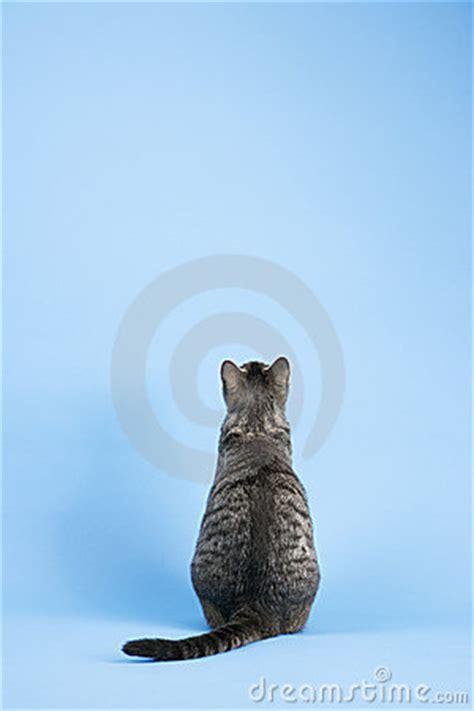 view  cat stock image image