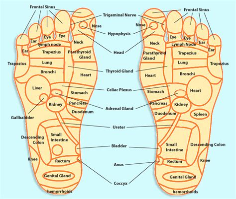foot diagram foot pressure points refelxology trivia foot