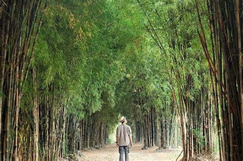 hutan bambu surabaya kesejukan  tengah kota februari