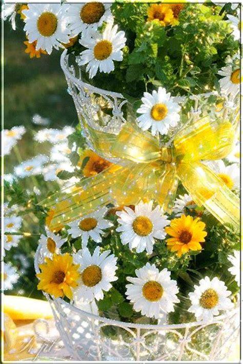 imagenes de flores margaritas 20 im 225 genes animadas de flores hermosas margaritas