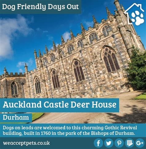 dog house auckland the 49 best images about dog friendly days out on pinterest bude cornwall cumbria