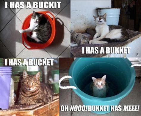 Meme Bucket - i has a buckit cat meme cat planet cat planet