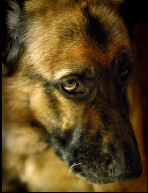 do dogs burp talk 101 burps