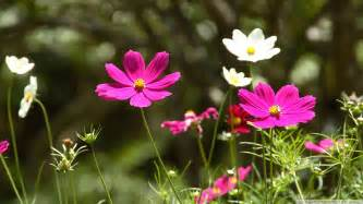 Flower Spring by Flowers Wallpaper 573243