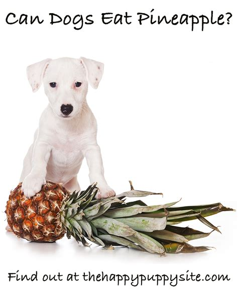 pineapple for dogs can dogs eat pineapple the happy puppy site food safety guide