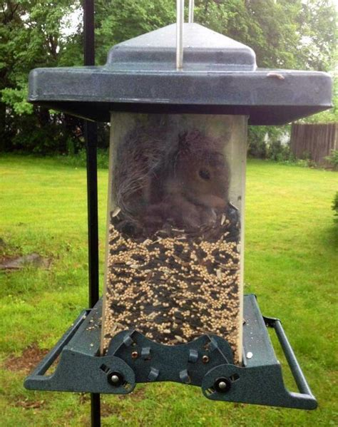 squirrel inside bird feeder squirrel supplies