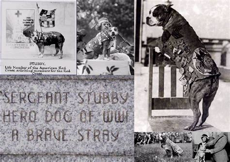 Sgt Stubby Most Decorated War Animals Remembered Association Sgt Stubby