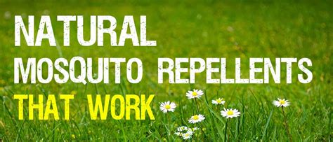 natural mosquito repellents that work mosquitofixes