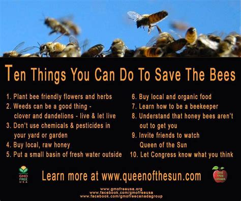 here are some things you can do to improve the state of your skin bee quotes and sayings quotesgram