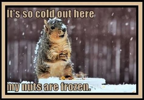 it s hot out funny images it s so cold pictures photos and images for facebook