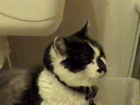 Cat Has Stools by Cat S