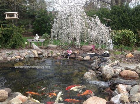 backyard pond maintenance ecosystem pond maintenace spring pond or water garden