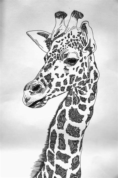 drawn giraffe real pencil and in color drawn giraffe real