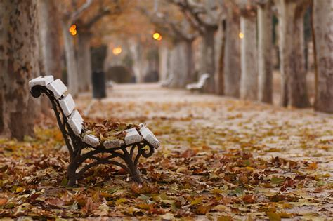 autumn park bench autumn park bench fallen leaves desktop wallpaper