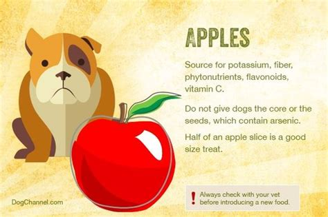 are apples ok for dogs the world s catalog of ideas