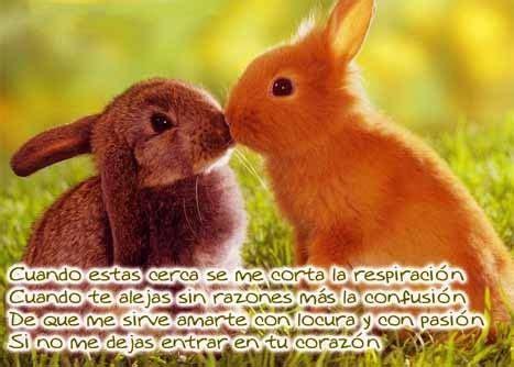 conejitostiernosparaenamorados imagenes de amor pinterest