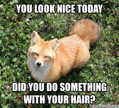 Meme Fox - red fox meme