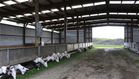 Goat Farm House Design Goatvet Likes This Website About Sheds For Dairy Housing In New