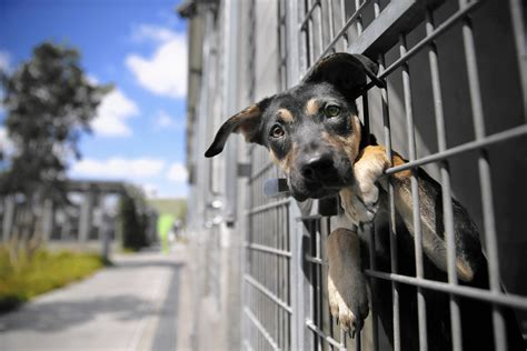 animal shelters improving officials say but activists