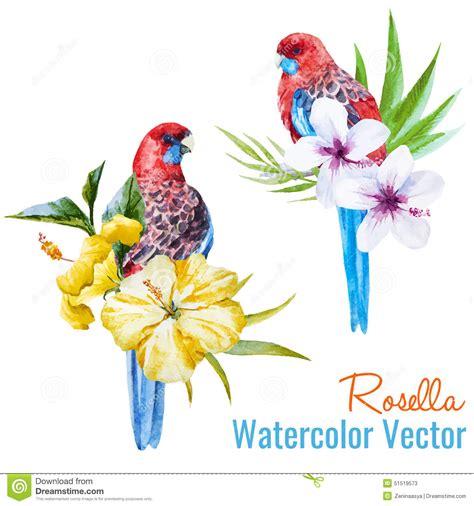Asos10524 Floral Bird Tropical Blue White S M Import Chiffon Dress tropical birds stock vector image 51519573