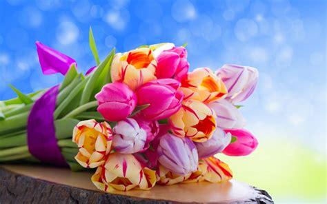 fiori dell fiori dell amicizia significato fiori
