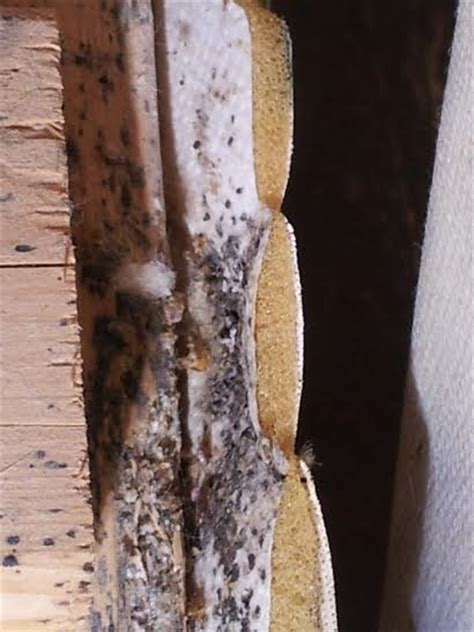 bed bug fecal stains what a nightmare bed bug infestation looks like worcester herald