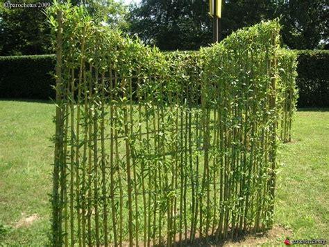 Barriera Fonoassorbente Vegetale by Cl 244 Ture V 233 G 233 Tale En Saule Tress 233 Garden Separation Ideas
