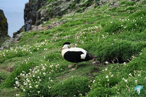 isle of may boat trips north berwick north berwick boat trips to the isle of may and bass rock