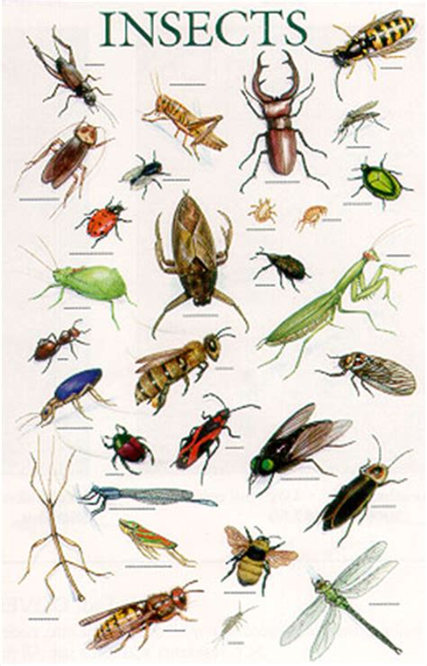insectanatomy free insect animal pictures gallery insect swap sign ups 6 8 12 6 15 12 sendouts 7 13 12