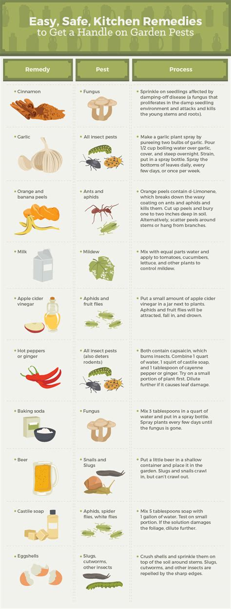 Home Remedies For Small Insects In Kitchen How To Get Rid Of Common Garden Pests Fix