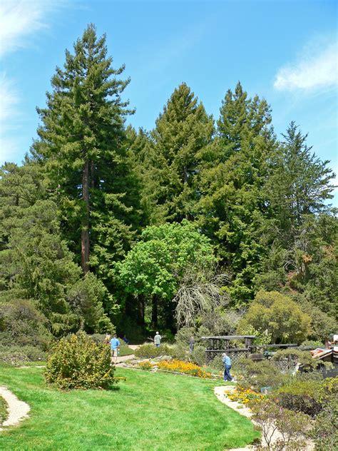 Garden Trees File Regional Parks Botanic Garden Trees Jpg Wikimedia