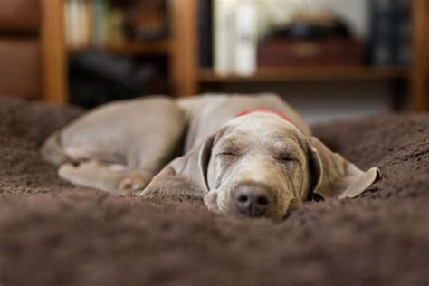 dog couch alarm the best kinds of dog beds for your pooch