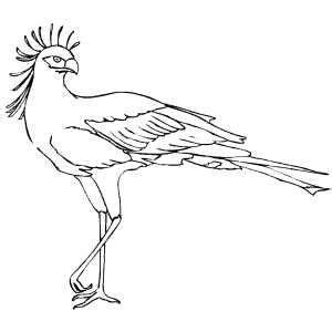 secretary bird coloring page secretary bird on one leg coloring page