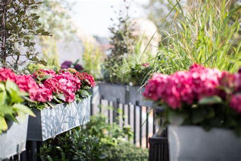 immergrüne pflanzen für sonnige standorte blumen f 195 188 r schattigen balkon wohnideen infolead mobi