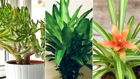 where to put plants in house 5 plants that can help purify indoor air