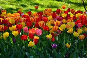 flores para jardins op 199 213 es
