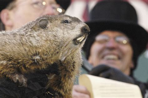 groundhog day on tv groundhog day where to tv schedule