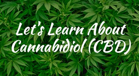 cbd hemp guide the ultimate guide to cbd hemp and cannabis medicin books cbd information the ultimate cannabidiol information