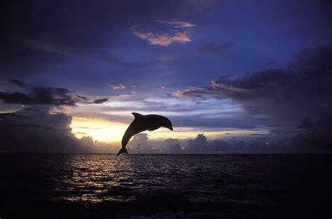 imagenes impactantes en el cielo dauphin fonds d 233 cran arri 232 res plan 4255x2804 id 641157
