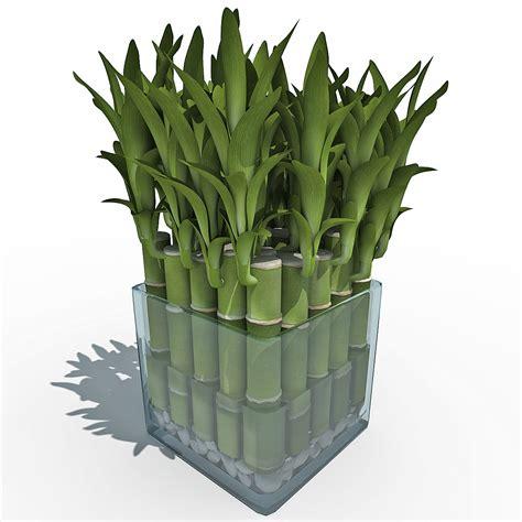 Lucky 3d 3d model lucky bamboo