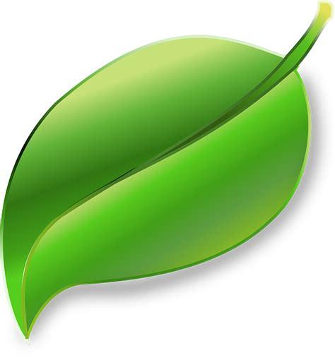 gambar vektor gratis daun tanaman ekologi lingkungan