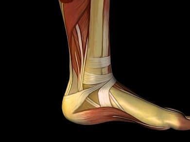 dolore alla caviglia interna fisioterapia rubiera dolore sintomi terapia e rimedi
