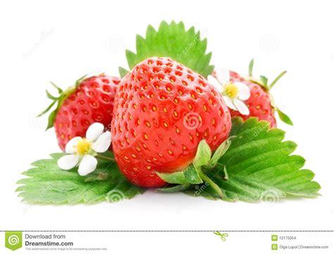 imagenes de flores y frutas frutas frescas da morango com flores e folhas imagens de