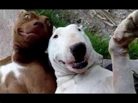 imagenes de animales graciosos las mejores selfies de animales animales graciosos youtube